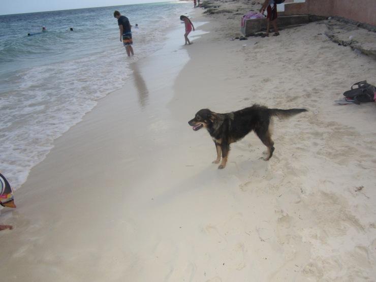 dog bahamas