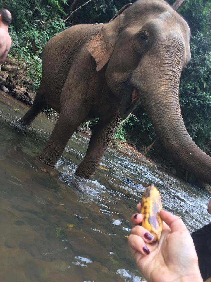 elephant wildlife