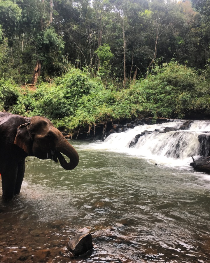 A day with the rescued Elephants of Mondulkiri