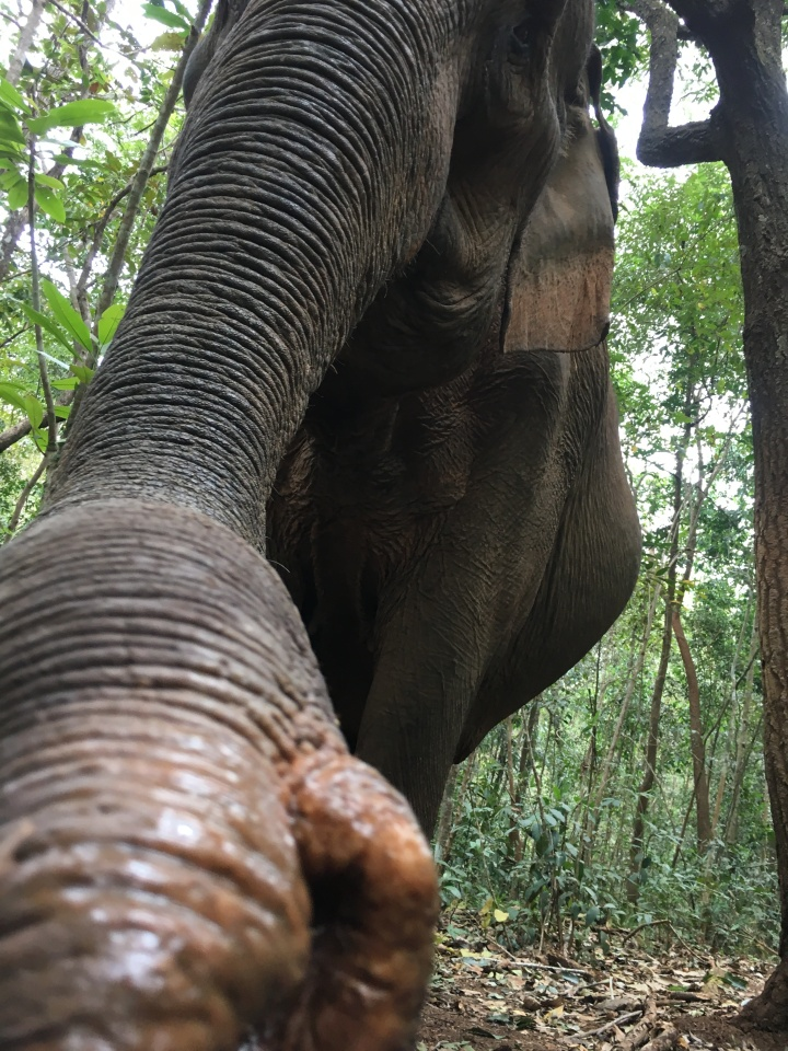 3 Things You Didn't Know AboutElephants